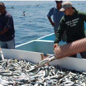 Curso APPCC para productos pesqueros, formacion online, cursos